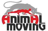 animal_moves_04